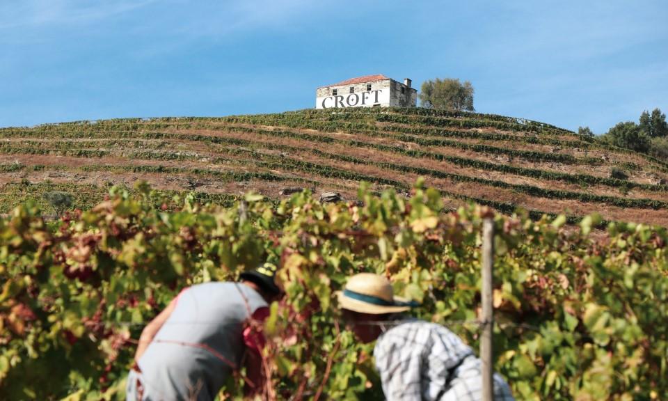 Colheita ou apanha da uva nas Vindimas do Douro - Rota do Douro