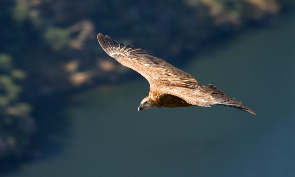 fauna do Parque Natural do Douro Internacional