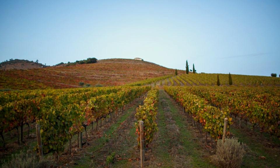 Port Wine Day - vinhas no Douro | Rota do Douro